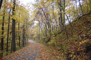 Little Shepherd Trail