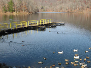 Fish Pond Lake